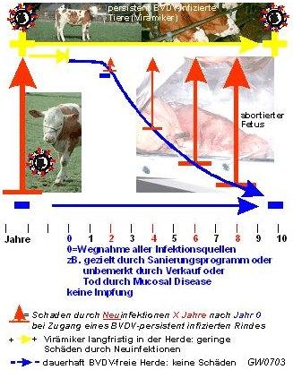 Veterinäramt :: BVDV-MD Kalkulation5
